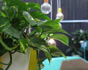 Urban-Jungle-books-plants-decorating-green